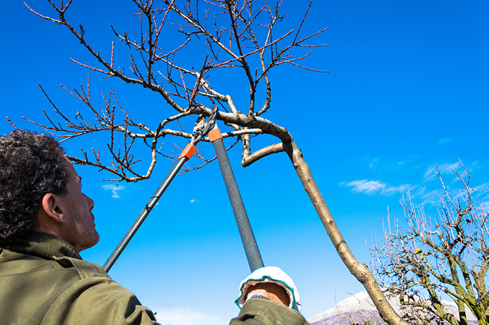 Tree Pruning by Napa Tree Services
