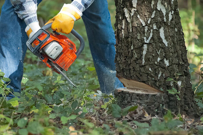 Napa Tree Services Tree Removal