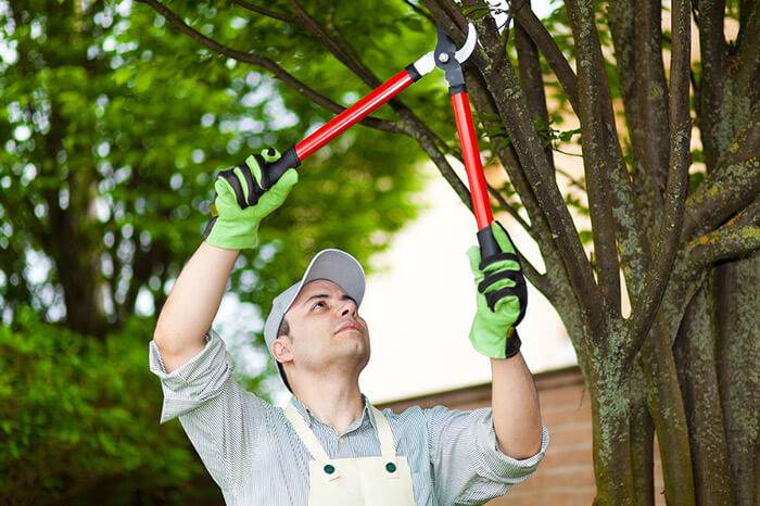 Napa Tree Services Tree Trimming
